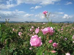 Imagem ilustrativa de um campo cheio de flores.